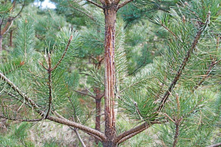 I en rapport från 2019 uppskattade Skogsstyrelsen kostnaden för betesskador till 7,2 miljarder kronor per år.