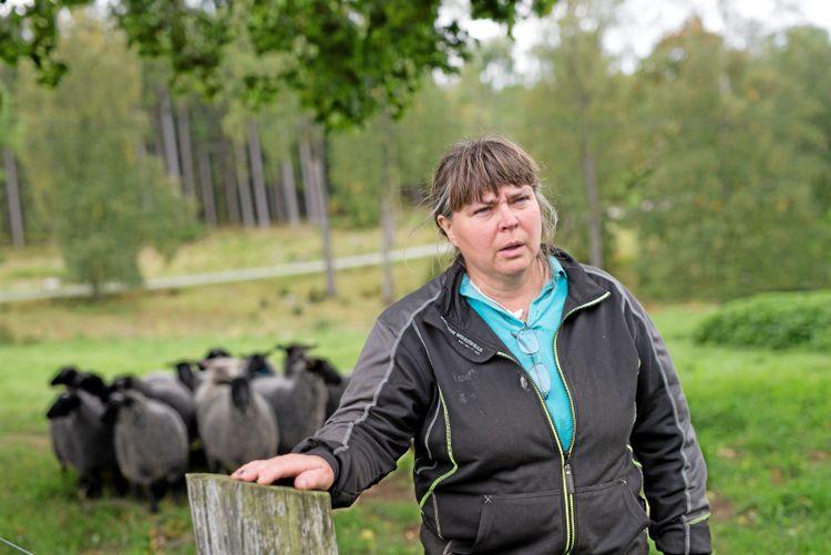 Gudrun Haglund-Eriksson ordförande för Svenska fåravelsförbundet, med en flock får.