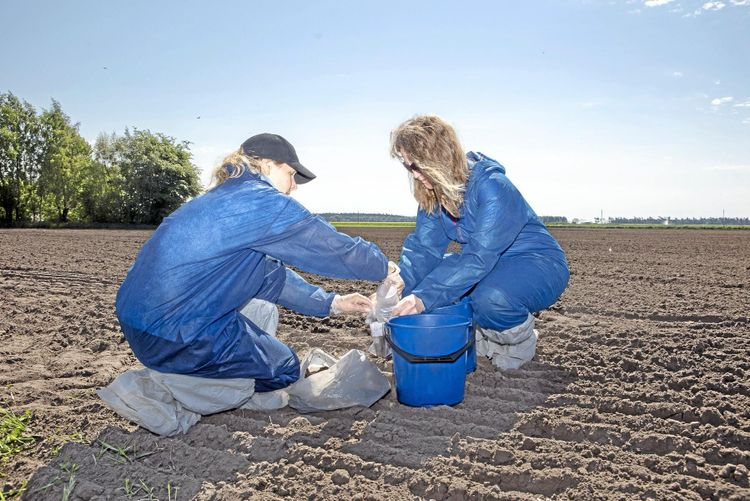 Två kvinnor i blå overaller sitter på åker och tar prover av jorden för att upptäcka om det innehåller rotgallnematoder.