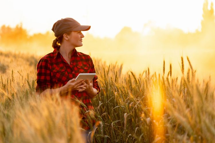 Kvinna i rutig skjorta i ett fält av råg.