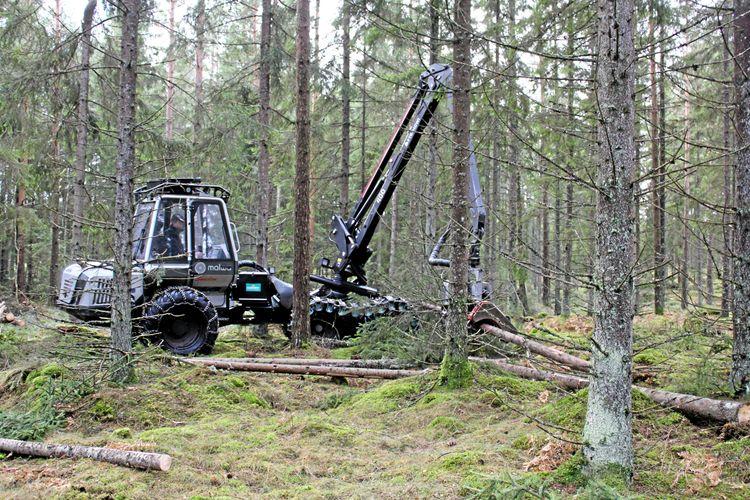 Skogsmaskin arbetar i skogen.
