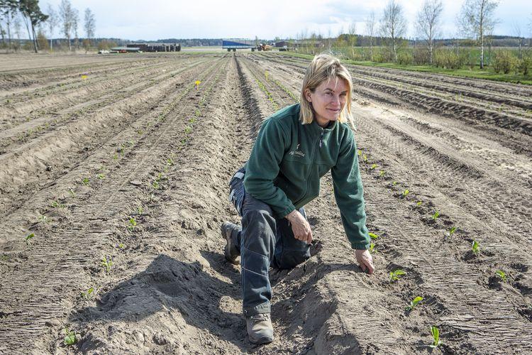 Magdalena Hermelin i grönsaksodlingen.