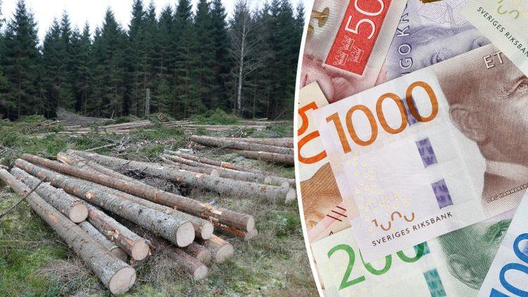 Montage av två bilder. Bild till vänster föreställer avverkad skog, bild till höger utspridda svenska sedlar i olika belopp.