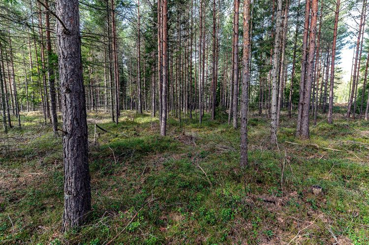 Bild på skog.