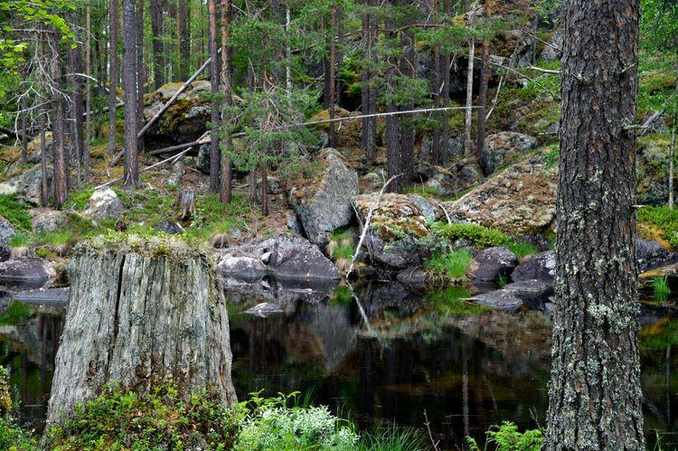 Trollskogen hägrar i skogsdebatten.