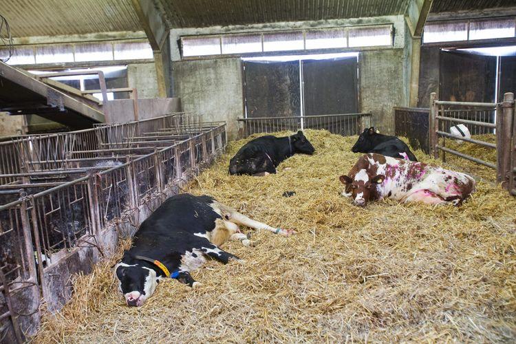 Kor i ligghall.