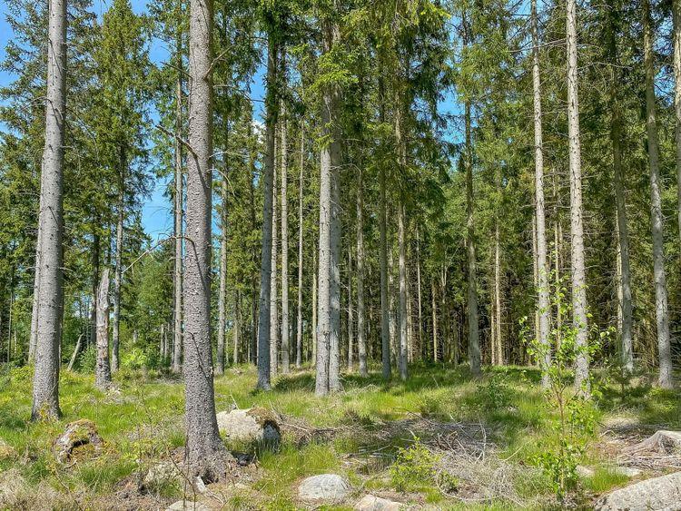 Skogsfastigheterna omfattar totalt 225 hektar mark.