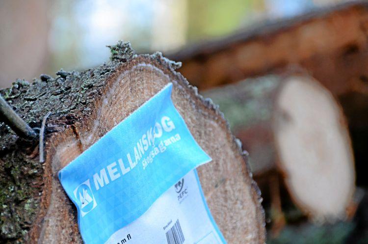 Närbild på stockända av gran med en vältlapp från Mellanskog.