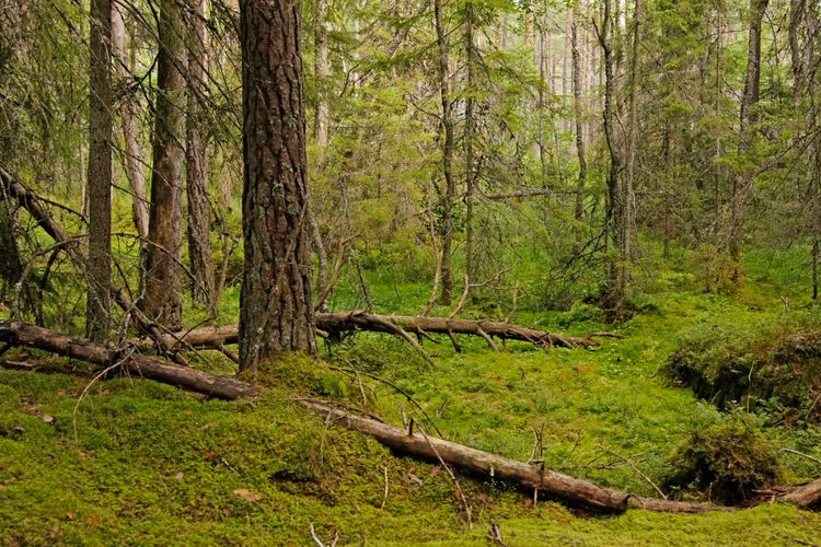 Tät och grön trollskog.