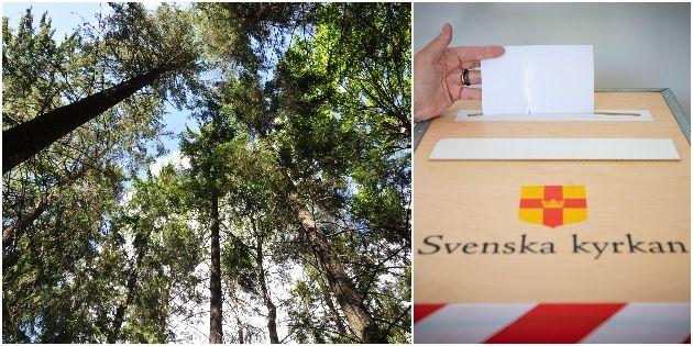 """Svenska kyrkan är en av Sveriges största skogsförvaltare. Ett nystartat nätverk har skrivit brev till stiften med begäran om """"nödstopp för skogsavverkningar""""."""