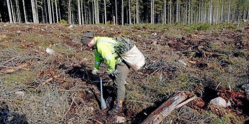 Bekräftat –det blir undantag för skogsarbetare