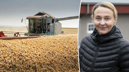 Priset på godkänd soja fortsätter öka