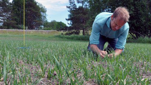 Insekter tuff utmaning efter sent vårbruk