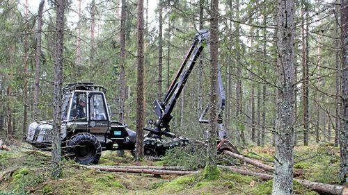 Lönsamheten i skogsbruket fortsätter falla