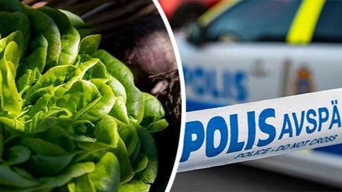 Polisinsats mot illegal arbetskraft i jordbruket