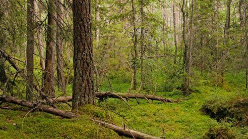 Brukade arealen i skogen minskar