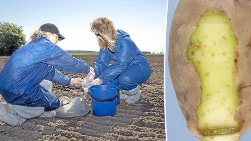 Nya fall av rotgallnematoder på svenska gårdar