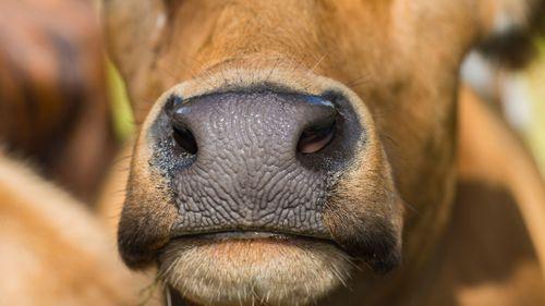 Beslut om att omhänderta hundratals djur upphävs
