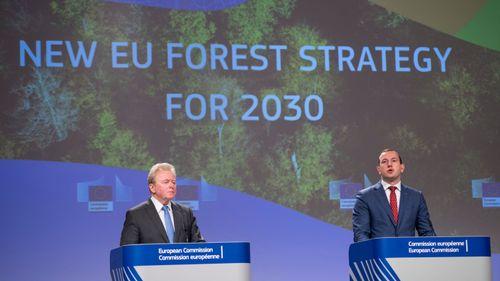 Skogsstrategins mål: Mindre intensivt skogsbruk