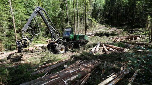 Stabilt väder bra för skogsproduktionen