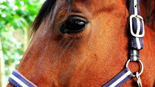 Annonskampanj ska få fler att registrera hästanläggningar