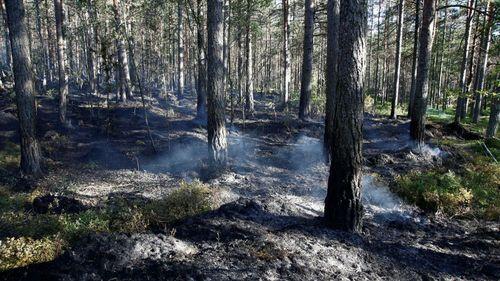 Efter skogsbranden – detta gäller för efterbevakning
