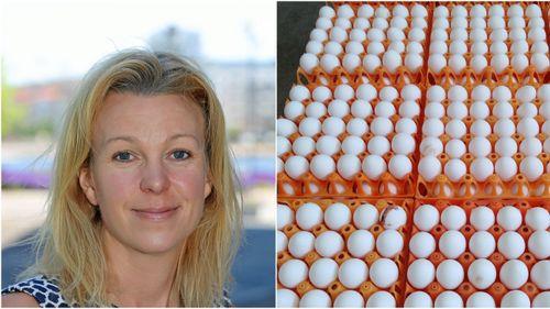 Inga planer på förbud mot avlivning av tuppkycklingar