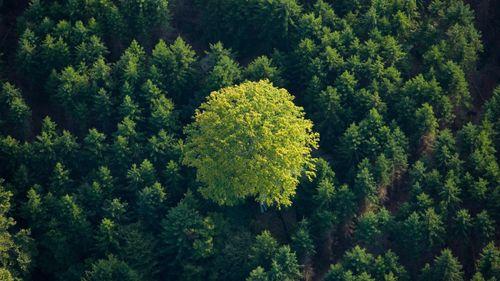 Stark kritik mot skogsstrategin på rådsmöte