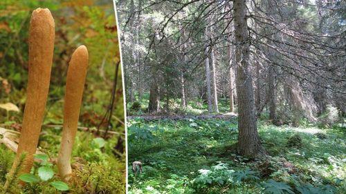 Vill skydda 9 000 hektar skog – beräknas kosta 1,5 miljarder