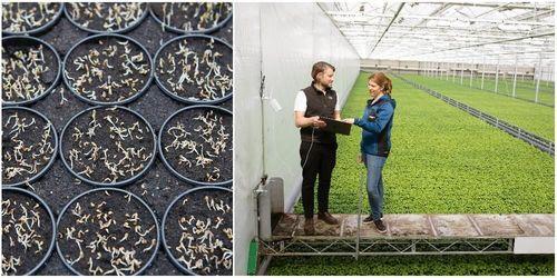 Svegro lyfte odlingen med egen algoritm