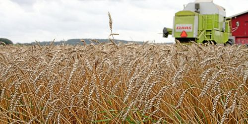 Bättre prisinformation till lantbrukare