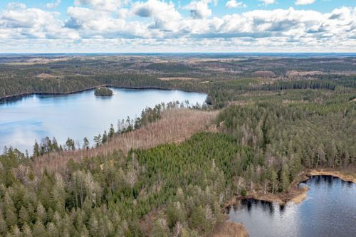 520 hektar bolagsskog till salu i Halland