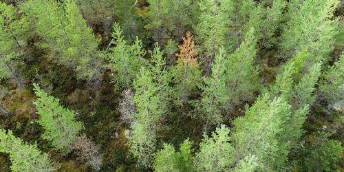 Ungskogen i norr hårt drabbad av skador