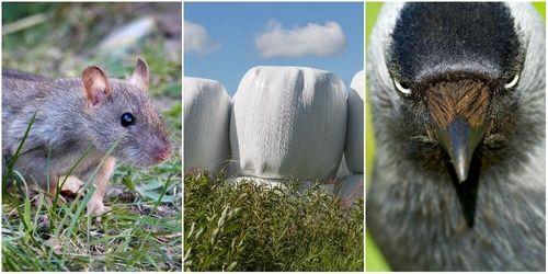 Ny ensilageplast stoppar fåglar och möss